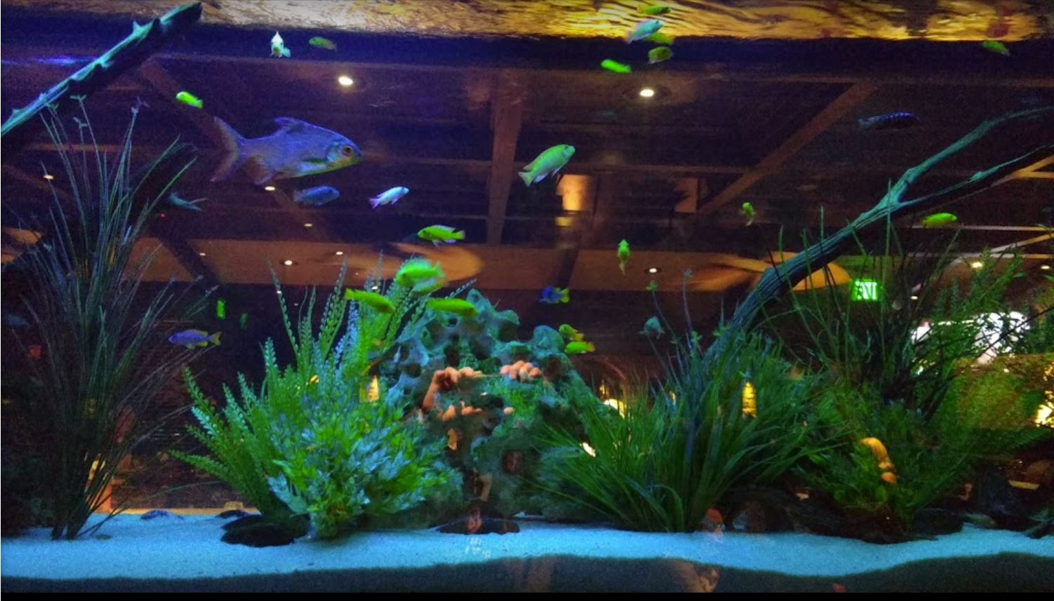 Impress your clients with a squeaky-clean aquarium